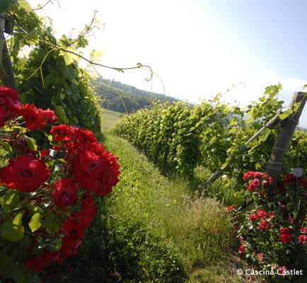 Piemont